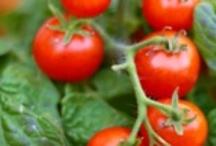 Garden fruit & tomatos / by Lila Wickham