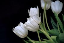 paint acryl flower iris,daisy,tulip / by Lila Wickham