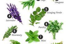 Natural Remedies / Natural health, healing herbals, holistic health, alternative medicine, essential oils, herbal, herbs, supplements, natural health products, canada