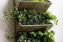 Gardening Tips / backyard garden ideas, growing food