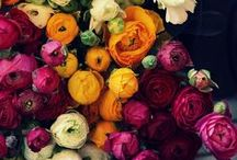 flowers ✿ / Simply gorgeous flowers...