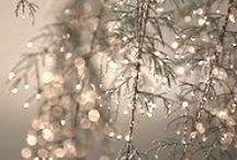 winter / by Sandy Taylor