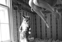 HumorousCats :D / by Rhonda Moss