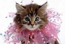 Cute Baby Animals / by Karen Fellema