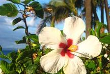 Hawaii / by Patricia H