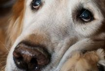 Dog Love / by Sandy Taylor