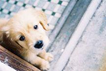 The cutiest