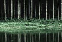 A Forest / by Naomi Vona