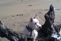 In Memory of Opie / by Nell H
