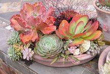~SOOO Succulent~ / by Christi Crook Benton
