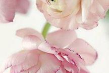 FLEURS. / Flowers, bouquets, buds and floral arrangements