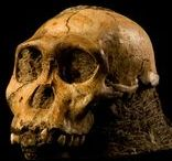 Early Humans / Everything you want to know about the weird species we know as homo sapiens.