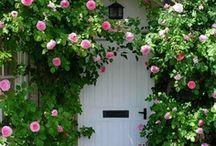 Gardens / by Sanna Davis