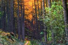 my dream driveway / by Jacque Stickels