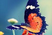 Butterflies / by Lindsey Botkin