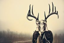 Awesome Antlers / by Lindsey Botkin