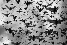 Beauty of Bats / by Lindsey Botkin