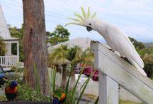 Australian Birds / Original pictures of Australian birds