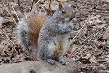 Squirrels / Original pictures of squirrels