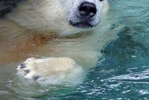 Polar Bears / Original photos of polar bears from zoos around the world