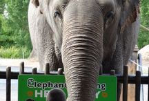 Elephants / Original photos of elephants from zoos all over the world