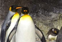 Penguins / Original pictures of penguins from zoos all over the world