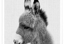 Dear Donkey