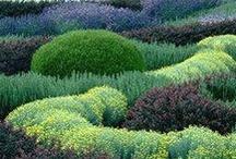 Gardening / by Donna O'Brien