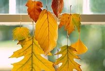 Autumn/Fall / by Liz Dyer