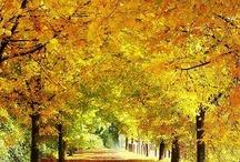 Herfst / herfst, sfeer, bomen, hout, haardhout, vuur, warmte , kachel