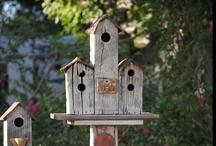 Birdhouses / by Liz Dyer