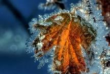 Winter / winter, kou, openhaard, opwarmen, sneeuw, ijs,natuur,hout.