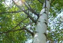 Hout / producten van hout, hout, bomen , haardhout