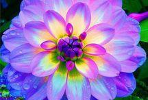 Garden-Flowers / by Anne Jasperson