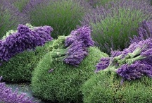 Garden-Herbs / by Anne Jasperson