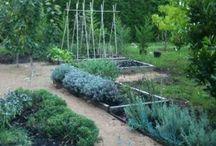 Garden-Vegetables-Design / by Anne Jasperson
