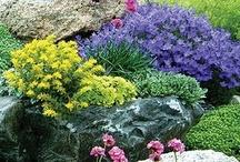 Gardening-Rocks and Walls / by Anne Jasperson