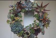 Garden-Flowers-Design / by Anne Jasperson