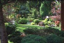 my polish garden