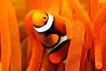 Orange is my favorite color