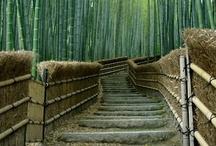 Cool Stairs & Slides  / by Rosaura Ochoa
