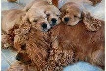 Puppy Love / by Jennifer Kinsey
