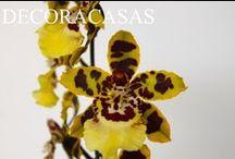 FLORES E PLANTAS / Orquídeas, suculentas, ervas, jardins. Tudo para cuidar melhor das suas plantas e flores, com dicas testadas por Flávia Ferrari no DECORACASAS.