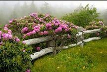 A fence is a fence / by Vicki Wronski