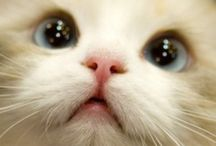 Cats my love!