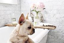 The Powder Room / Inspiration for your powder room, bathroom, or lavatory.