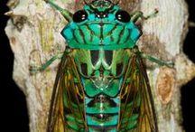 Beautiful Bugs / by Chaska Peacock