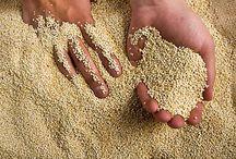 Quinoa!!! / Quinoa recipes! It's a super food.  / by Sam Himmelstein