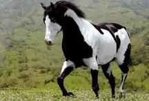I adore horses / by Jessie K
