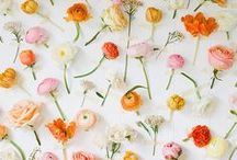 Floral Photography Inspiration / I'm always looking at ways I can use flowers in my hobby photography, this board has some great inspiration.